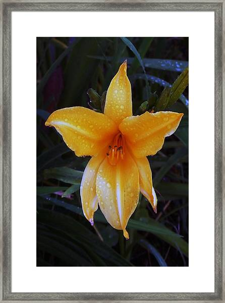 090714 Morning Dew Framed Print