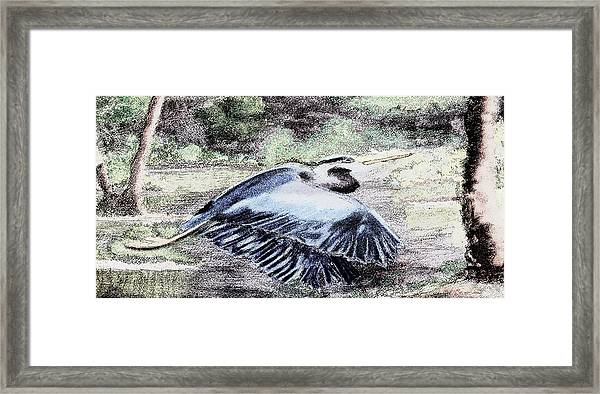091714 Graphic Pen Blue Heron Framed Print