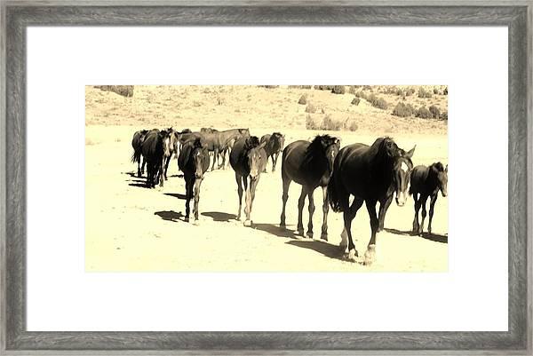 127 Framed Print by Wynema Ranch