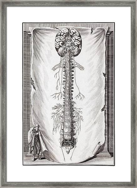 1731 Human Brain Spine Dissection Vesling Framed Print