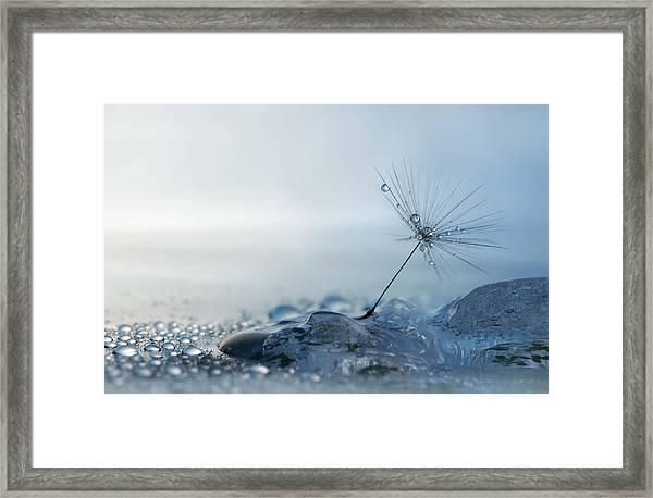 A Blue Morning Framed Print by Heidi Westum
