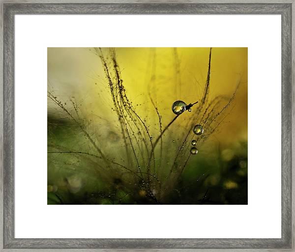 A Golden Morning Shower Framed Print