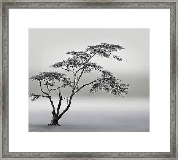 A Very Long Story Framed Print by Piet Flour