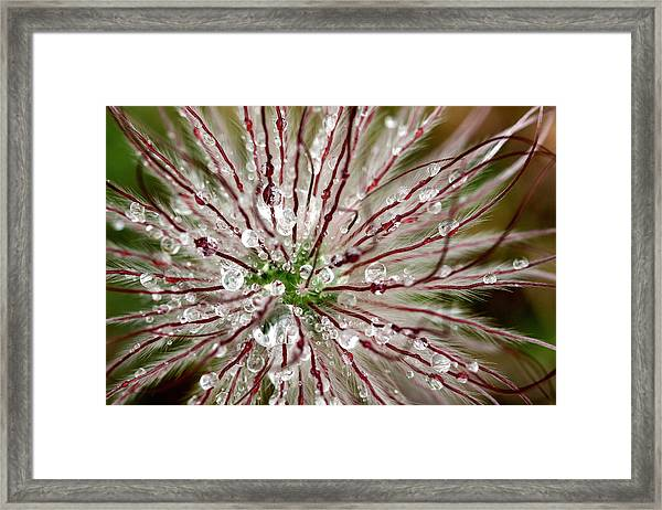 Abstract Macro Flower Head Framed Print