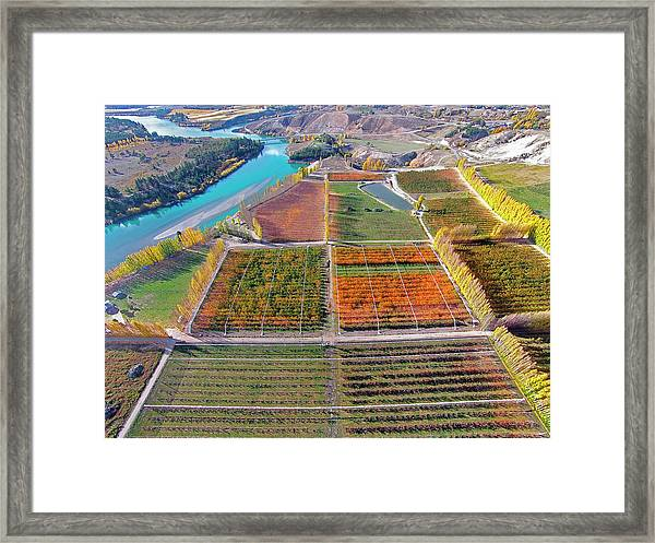 Aerial Over Autumn Orchards Framed Print by David Wall