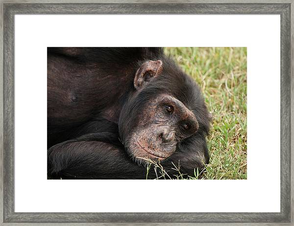 Africa, Kenya, Sweetwater Conservancy Framed Print