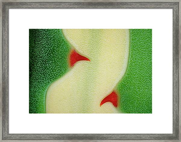 Agave Sp. Framed Print