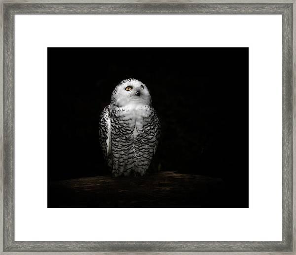 An Owl Framed Print