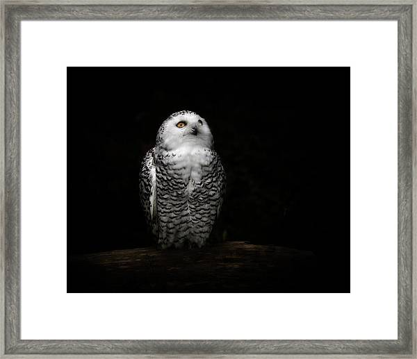 An Owl Framed Print by Kaneko Ryo