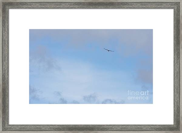 Andean Condor Framed Print