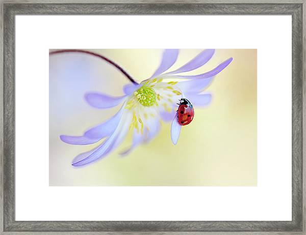 Anemone Lady Framed Print by Jacky Parker