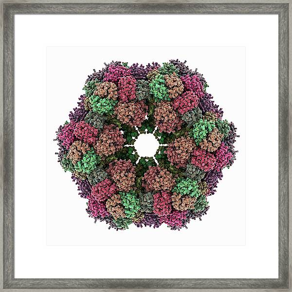 Annelid Oxygen-carrying Protein Molecule Framed Print