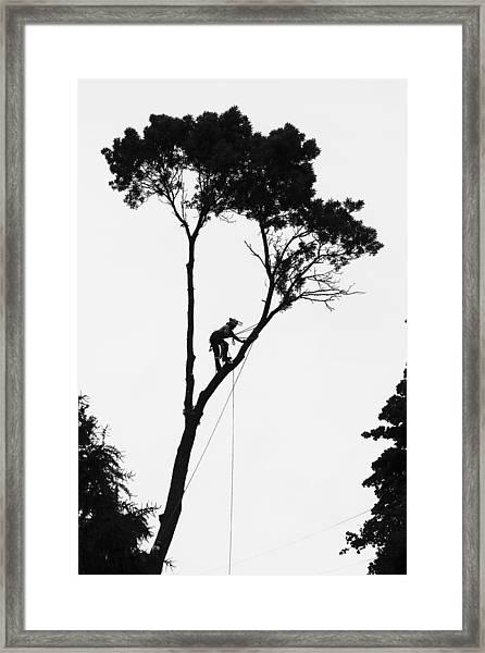 Arborist At Work Framed Print