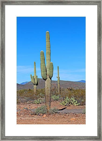 Arizona Desert Framed Print