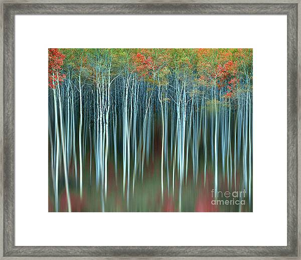 Army Of Trees Framed Print