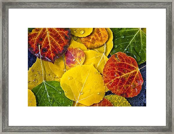 Aspen Rainbow Framed Print