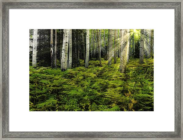 Aspen Sunrise Framed Print