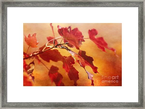 Red Blaze Framed Print