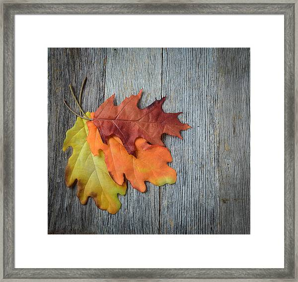 Autumn Leaves On Rustic Wooden Background Framed Print