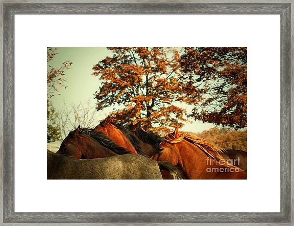 Autumn Wild Horses Framed Print