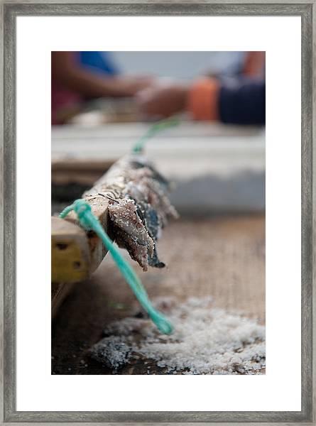 Bait On Hooks  Framed Print