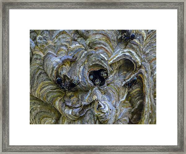 Bald-faced Hornet Nest Framed Print