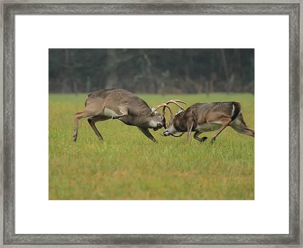 Battle Bucks Framed Print
