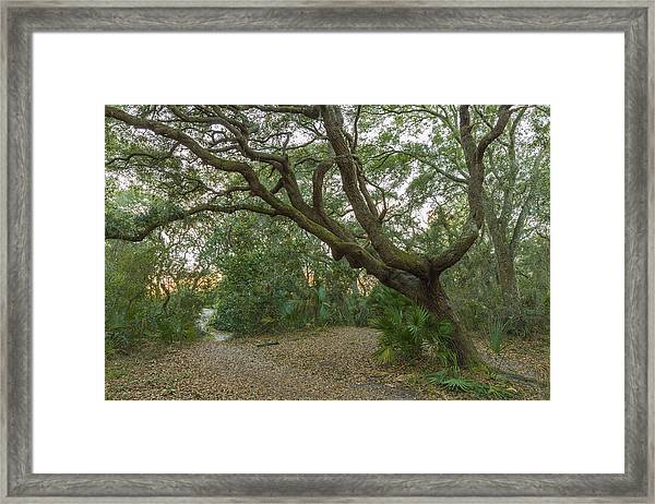 Behind The House Framed Print