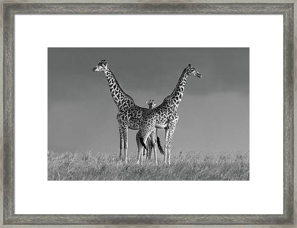 Between The Two Framed Print by Massimo Mei