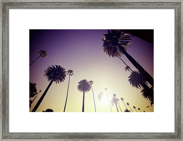 Beverly Hills Palm Trees Framed Print