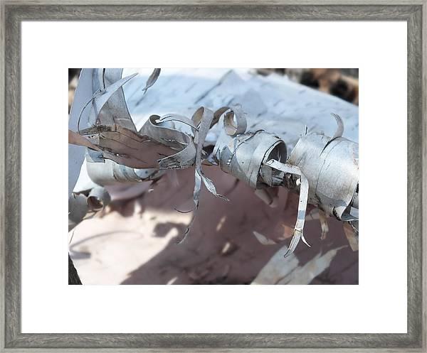 Birch Bark Framed Print by Gene Cyr
