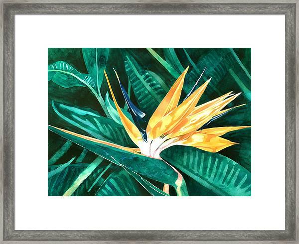 Bird Of Paradise Framed Print