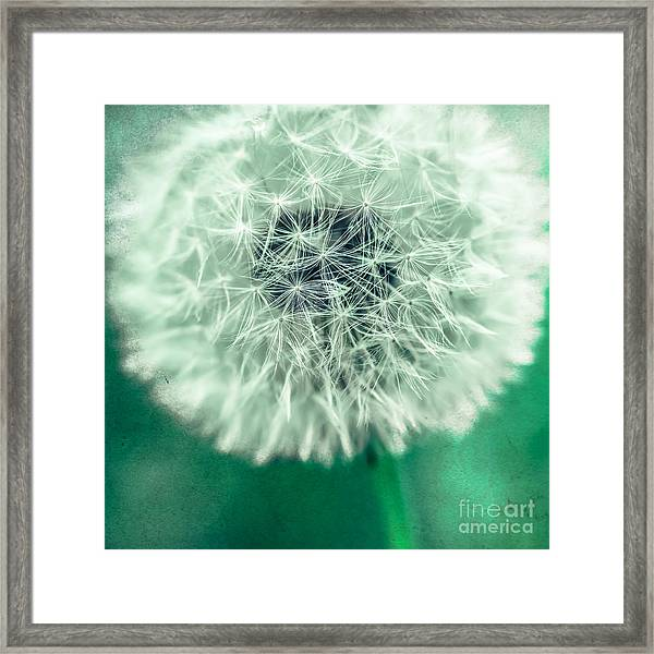 Blowball 1x1 Framed Print
