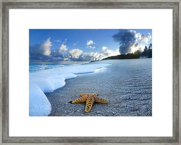 Blue Foam Starfish Framed Print