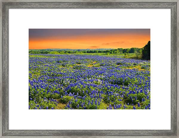 Bluebonnet Sunset  Framed Print