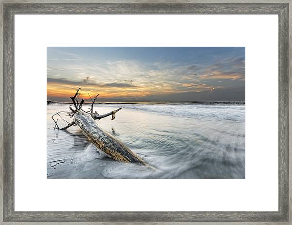 Bough In Ocean Framed Print