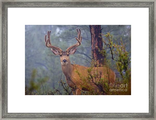 Buck Deer In A Mystical Foggy Forest Scene Framed Print