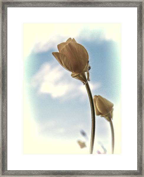 Framed Print featuring the photograph Buttercup Stretch by Beth Sawickie