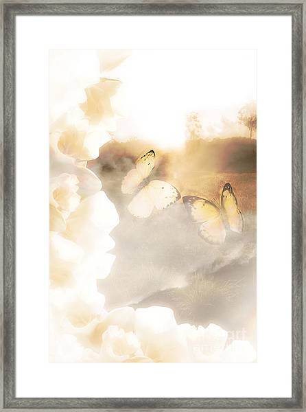 Butterfly Dreams Framed Print