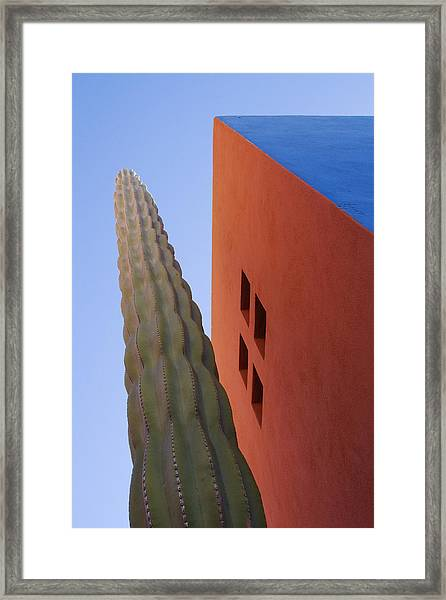 Cactus Against Colorful Walls Framed Print by Pixelchrome Inc