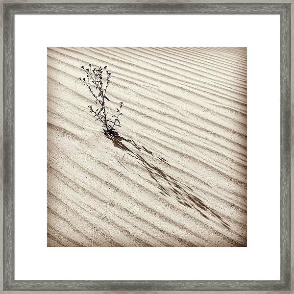 Cactus In Desert Framed Print
