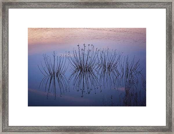 Cape May Meadows Framed Print
