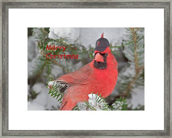 'capped The Cardinals II' Framed Print