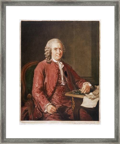 Carl Von Linne Known As Linnaeus Framed Print by Mary Evans Picture Library