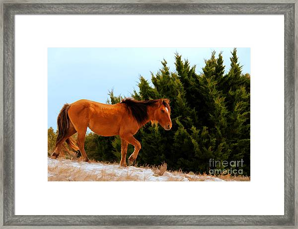 Carrot Island Pony Framed Print