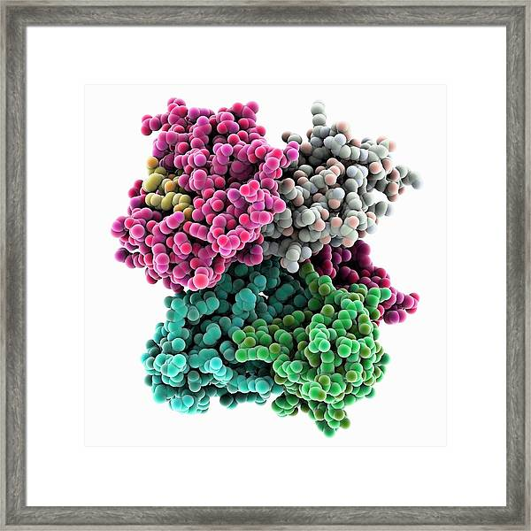 Cd8 Receptor Bound To Antigen Framed Print