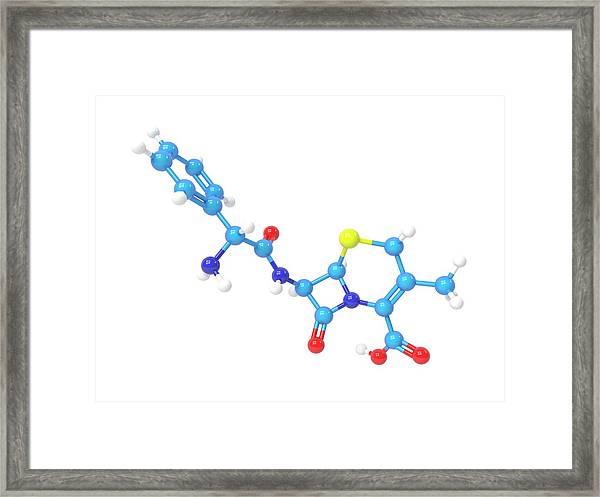 Cefalexin Molecule Framed Print by Indigo Molecular Images