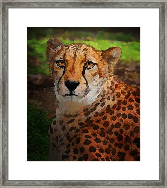 Cheetah Mama Framed Print