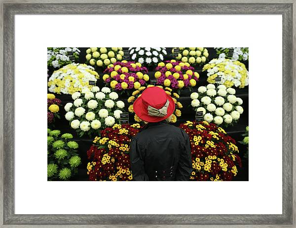 Chelsea Flower Show 2013 - Press Day Framed Print by Dan Kitwood
