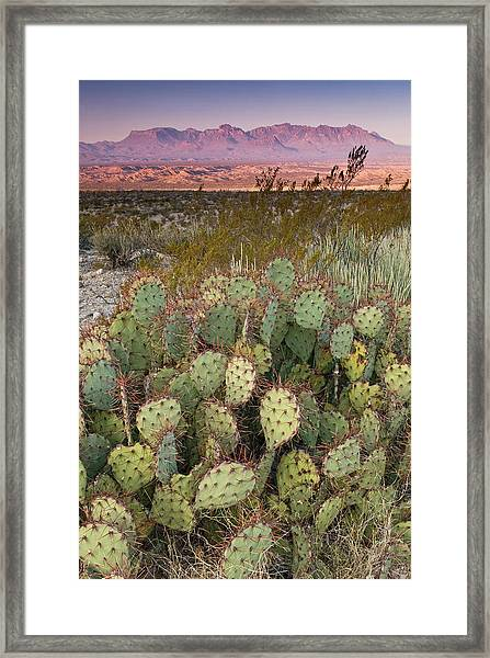 Chisos Mountains In Distance Seen From Framed Print by Witold Skrypczak